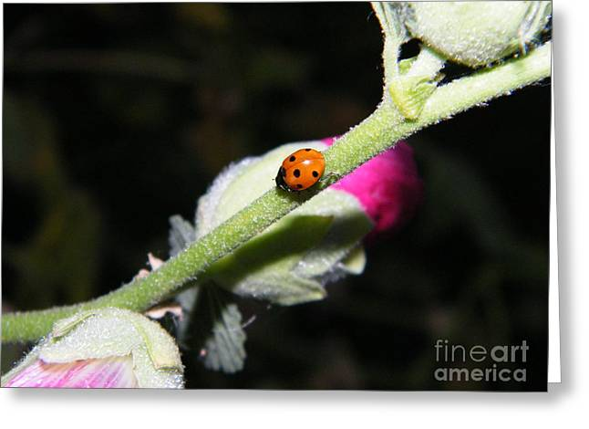 Ladybug Taking An Evening Stroll Greeting Card