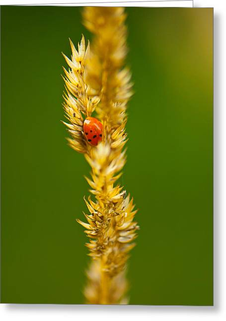 Ladybug Tucked In Greeting Card by Sarah Crites