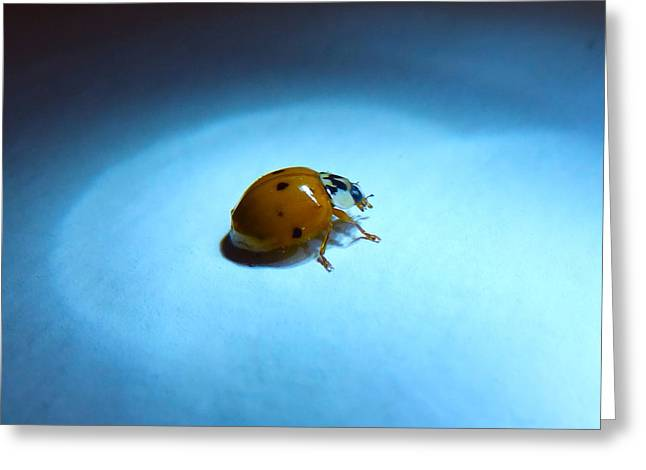 Ladybug Under Blue Light Greeting Card