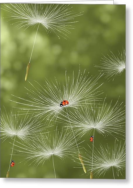 Ladybug Greeting Card by Veronica Minozzi