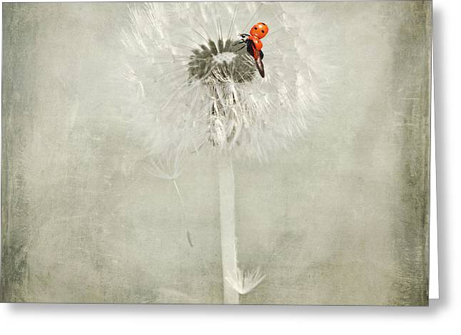 Ladybug With Dandelion Greeting Card