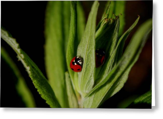 Ladybugs Greeting Card by Adria Trail