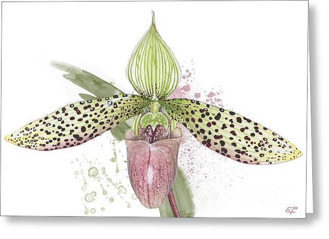 Ladys Slipper - Orchid 16n - Elena Yakubovich Greeting Card by Elena Yakubovich