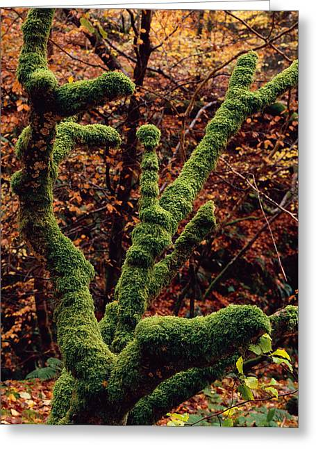 Lael Forest Garden 1 Greeting Card