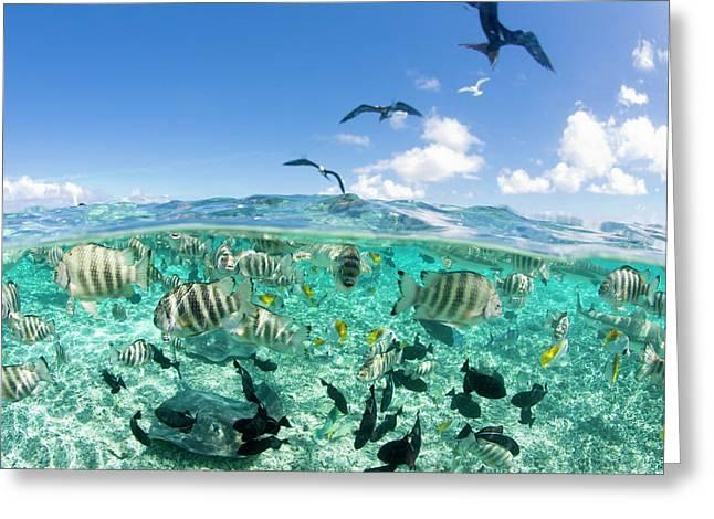 Lagoon Safari Trip Featuring Stingrays Greeting Card