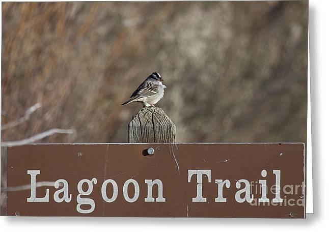 Lagoon Trail Gatekeeper Greeting Card by Douglas Barnard