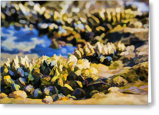 Laguna Beach Tide Pool Pattern 4 Greeting Card by Scott Campbell