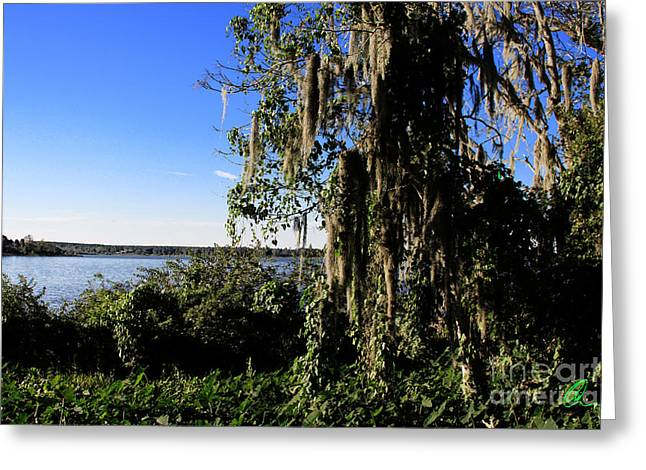 Greeting Card featuring the photograph Lake Apopka 1 by Chris Thomas