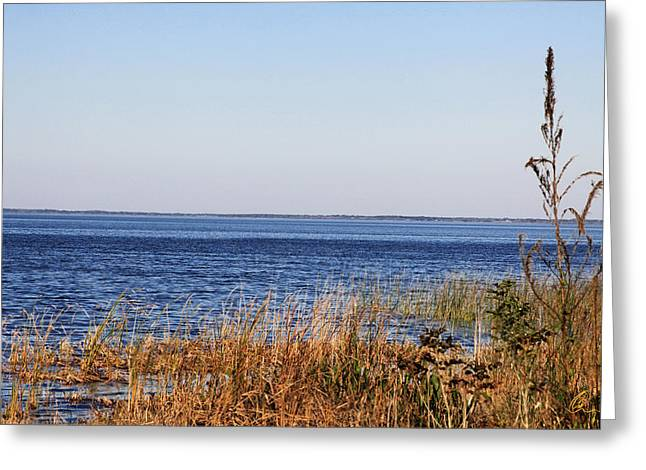 Greeting Card featuring the photograph Lake Apopka 2 by Chris Thomas