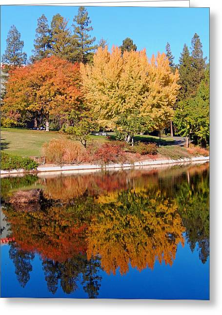Lake At Davis Greeting Card by Jim Halas