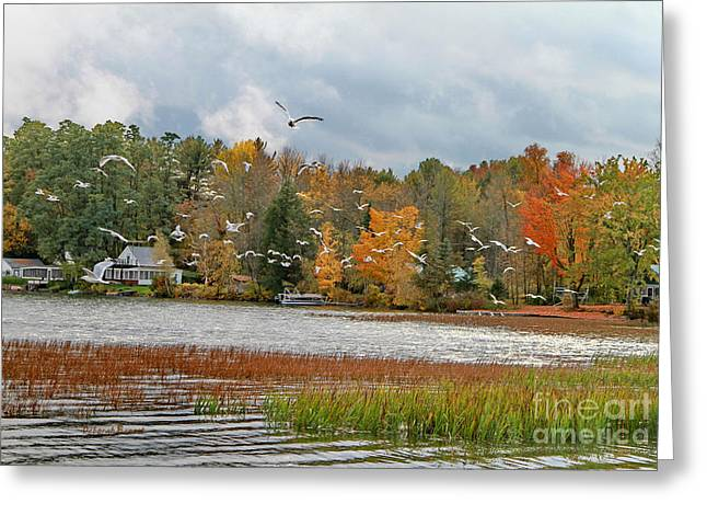 Lake Carmi Autumn 2012 Greeting Card by Deborah Benoit