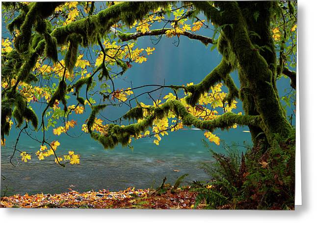 Lake Crescent, Olympic National Park Greeting Card