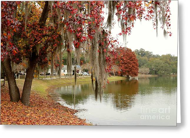 Lake Ella In Tallahassee Greeting Card by Carol Groenen