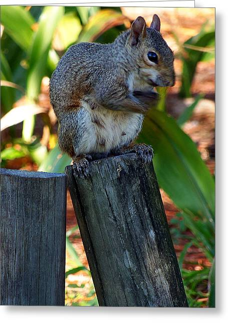 Greeting Card featuring the photograph Lake Howard Squirrel 019 by Chris Mercer