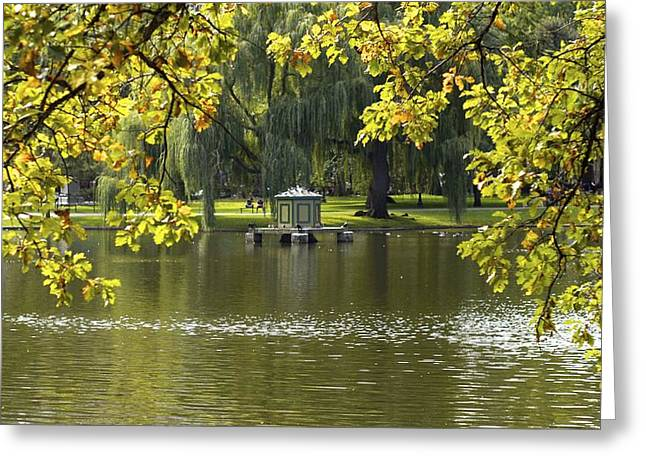Lake In Boston Park Greeting Card by Alex King
