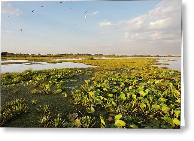 Lake In The Danube Delta, Romania Greeting Card by Martin Zwick