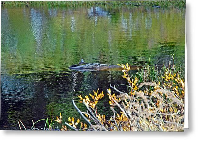 Lake Irene In Autumn Study 13-5 Greeting Card