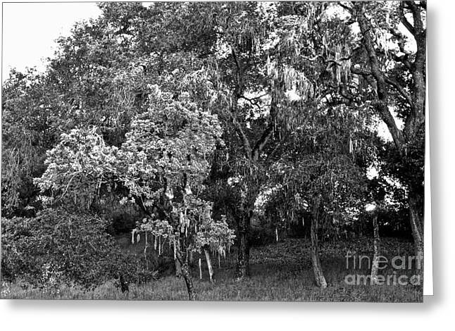 Greeting Card featuring the photograph Lake Lopez Oaks Bw    by Gary Brandes
