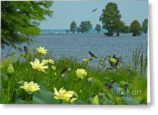 Greeting Card featuring the photograph Lake Lotus And Swallows by Deborah Smith