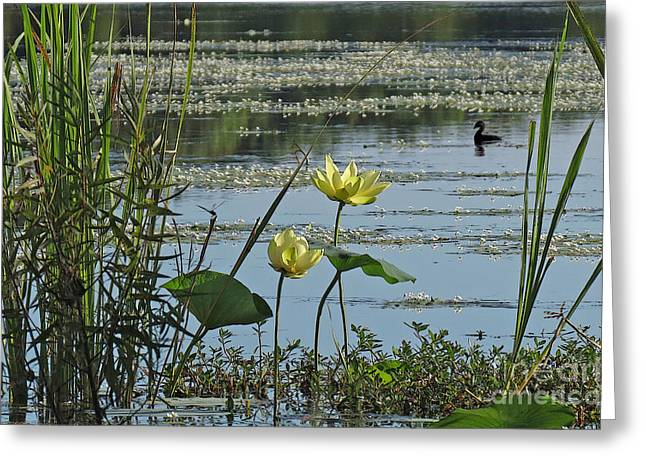 Greeting Card featuring the photograph Lake Marion Morning by Deborah Smith