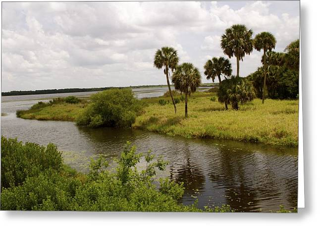 Lake Myakka Greeting Card