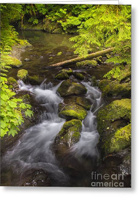 Lake Quinault Creek 2 Greeting Card by Sonya Lang