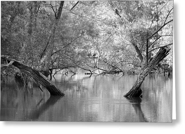 Lake Reflections Greeting Card by Misty Stach