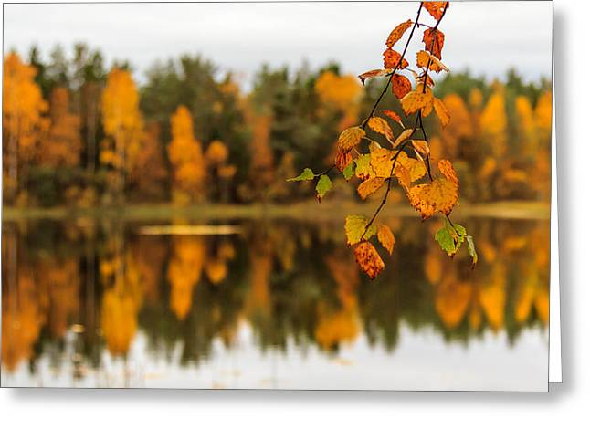 Lake Reflections Of Fall Foliage  Greeting Card by Aldona Pivoriene