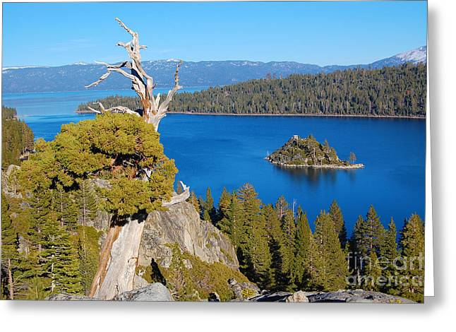 Lake Tahoe Reaching Tree Greeting Card