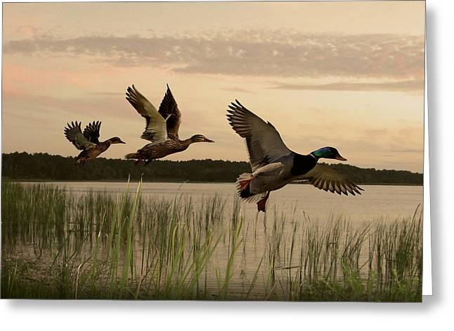 Lake Tarpon Ducks Greeting Card by IM Spadecaller