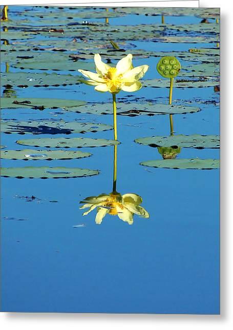 Lake Thomas Water Lily Greeting Card by Chris Mercer