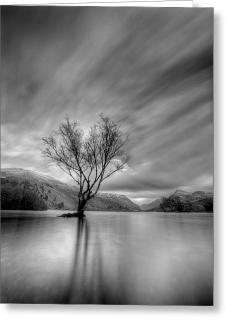 Lake Tree Mon Greeting Card by Beverly Cash