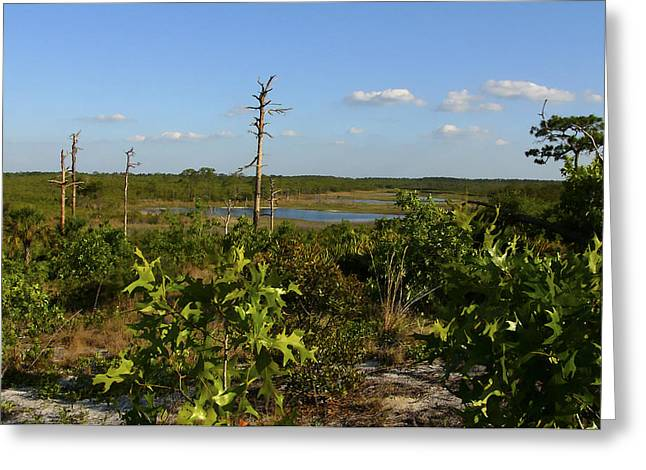 Lake View II. Lake Wales Ridge. Greeting Card by Chris  Kusik