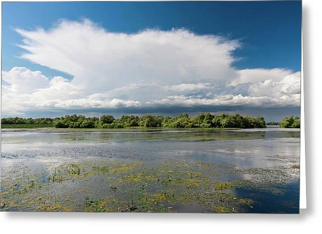 Lakes In The Danube Delta, Romania Greeting Card by Martin Zwick
