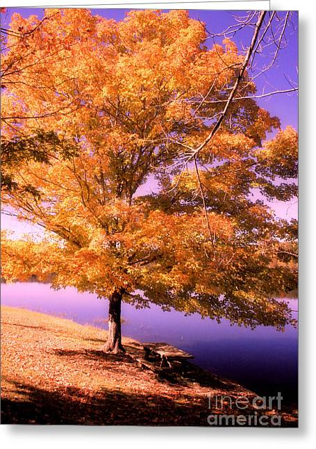 Lakeside Tree Greeting Card