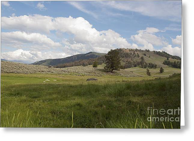 Greeting Card featuring the photograph Lamar Valley No. 2 by Belinda Greb