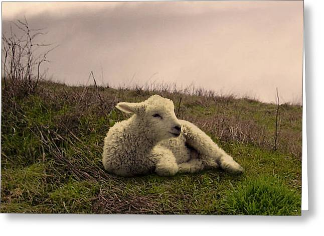 Lamb By Still Waters Greeting Card by IM Spadecaller