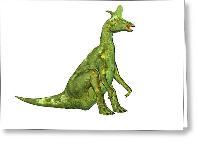 Lambeosaurus Dinosaur Greeting Card by Friedrich Saurer