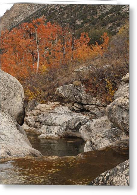 Lamoille Canyon Colors Greeting Card by Jenessa Rahn
