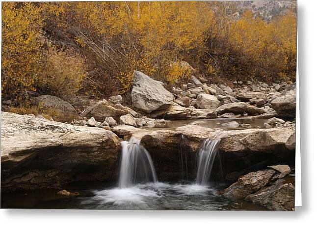 Lamoille Creek Greeting Card by Jenessa Rahn