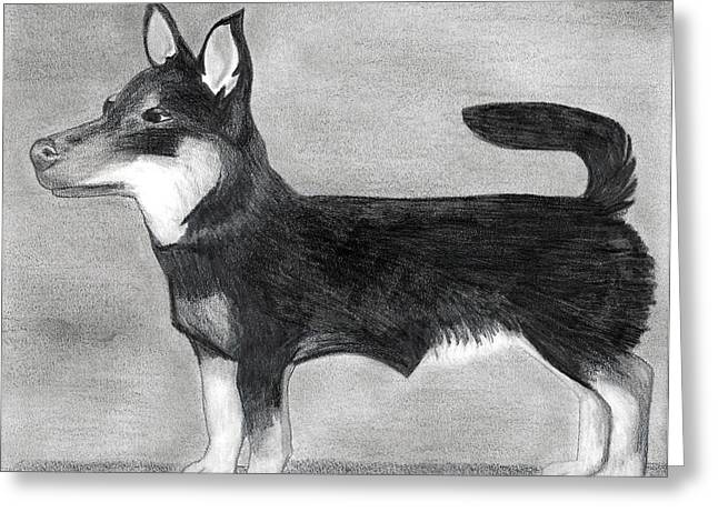 Lancashire Heeler Dog Portrait  Greeting Card by Olde Time  Mercantile
