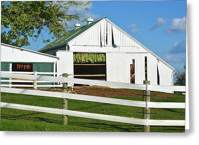 Lancaster County Tobacco Barn Greeting Card