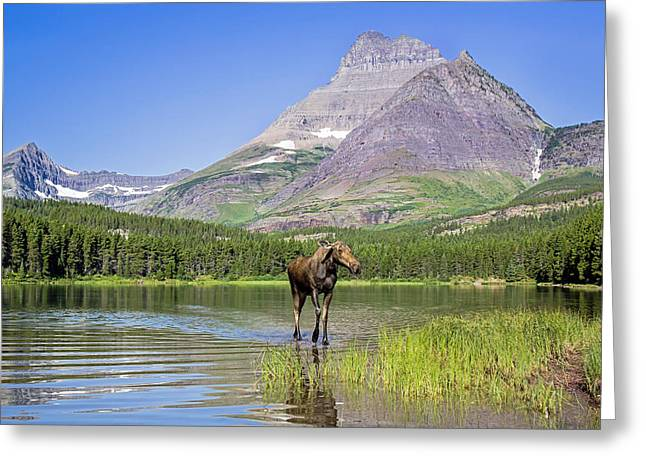 Land Of The Moose Greeting Card by Jack Bell
