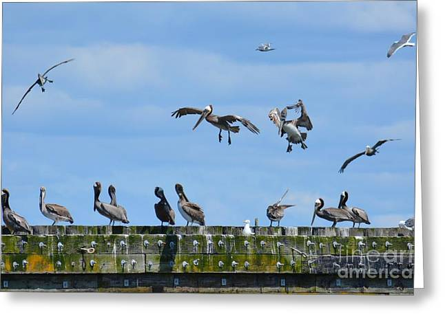 Landing Gear Down Greeting Card by Gayle Swigart
