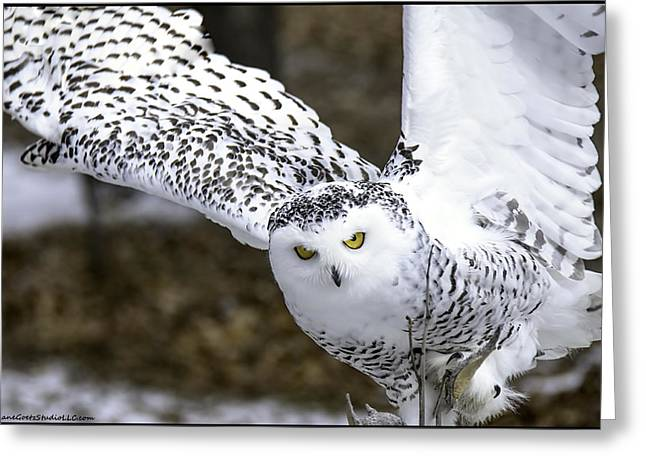 Landing Of The Snowy Owl Where Are You Harry Potter Greeting Card by LeeAnn McLaneGoetz McLaneGoetzStudioLLCcom