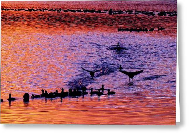 Landing Greeting Card by Will Boutin Photos