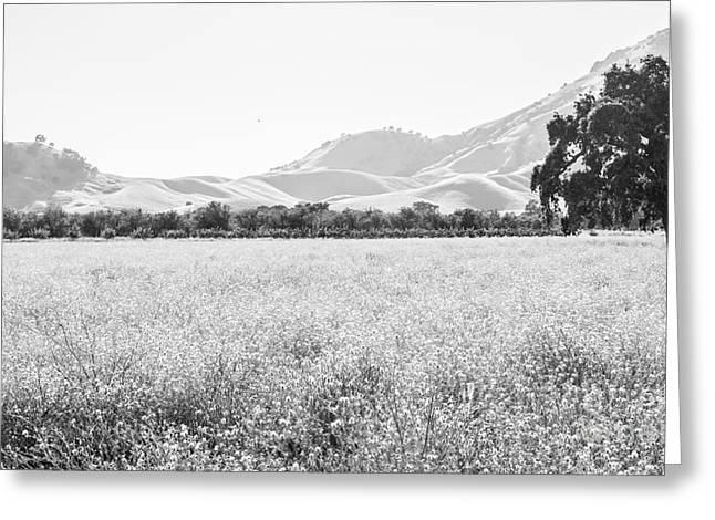 Landscape 24 M  Sac Ca Greeting Card
