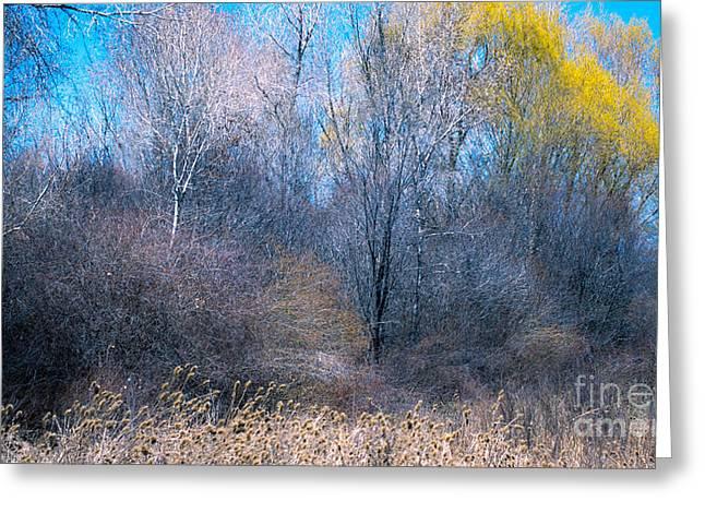 Landscape A10a Taos Nm Greeting Card