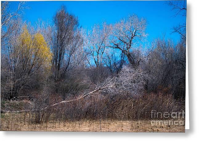 Landscape A10e Taos Nm Greeting Card