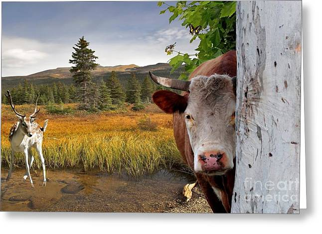 Landscape - Animals - Peek A Boo Cow Greeting Card by Liane Wright
